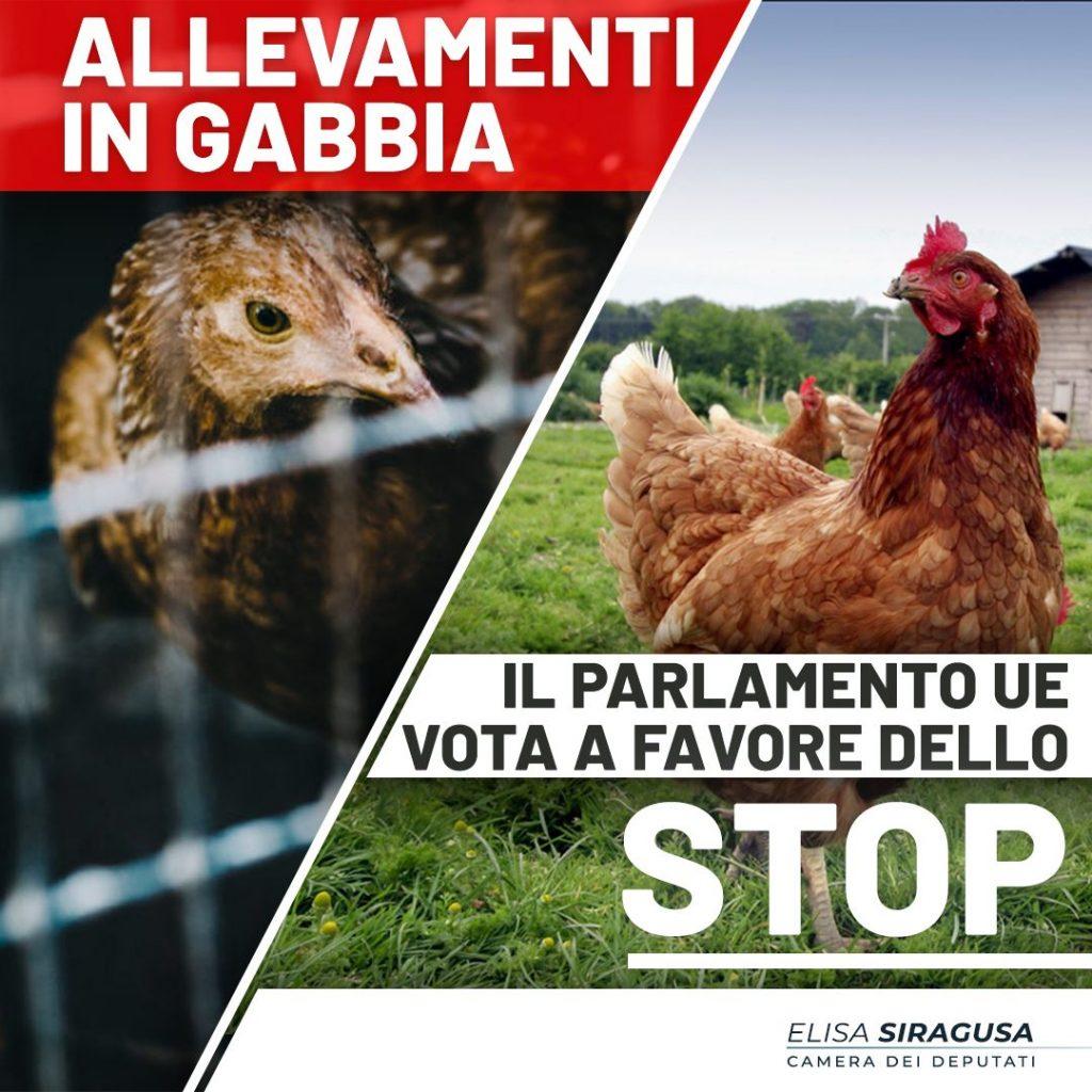 Allevamenti in gabbia: il Parlamento UE vota per la loro abolizione